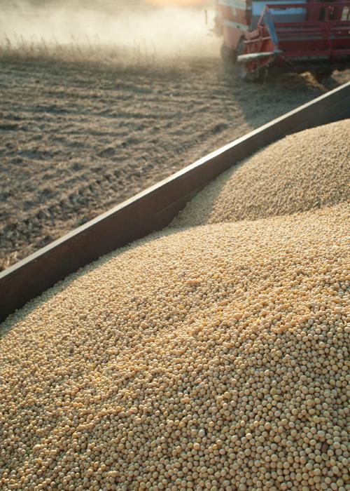 harvest-farm-grain