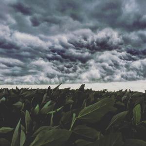 crop-storm