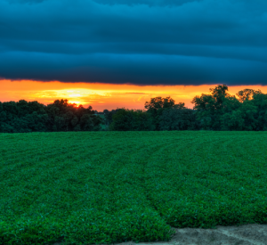 farm-field-sunset-country