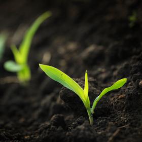 prevent-plant
